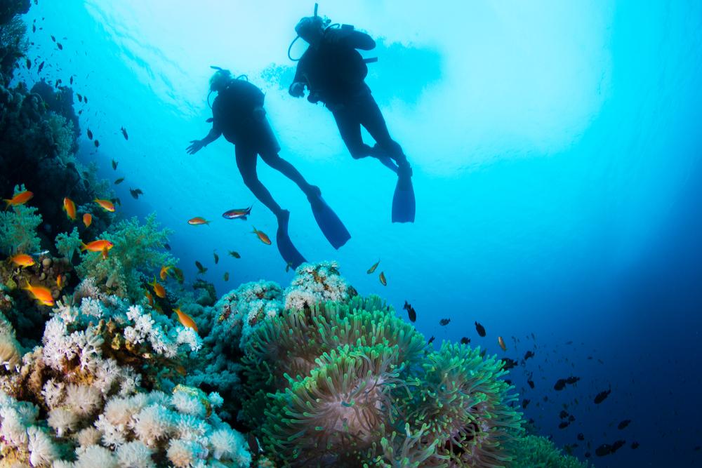 diving_138759491